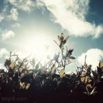 2015_knynk_ijsland_04